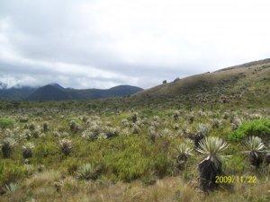 Páramo de Chingaza, Colombia - Valle de Frailejones. Fotografía: Diana Ruiz